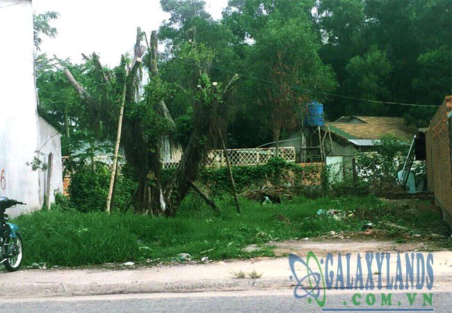 Hình ảnh thực tế đất khu dân cư Chánh Nghĩa