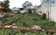Bán đất Chánh Mỹ gần ngã tư cây Dừa, DT 5x29m, đường nhựa 5.5m.