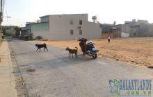 Bán đất đường hẻm Nguyễn Bình 6x41m gần khu dân cư Phúc Đạt