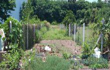 Bán đất đường DX25 cách đường Huỳnh Văn Lũy chỉ khoảng 70m